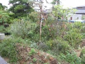 庭ビフォー 2